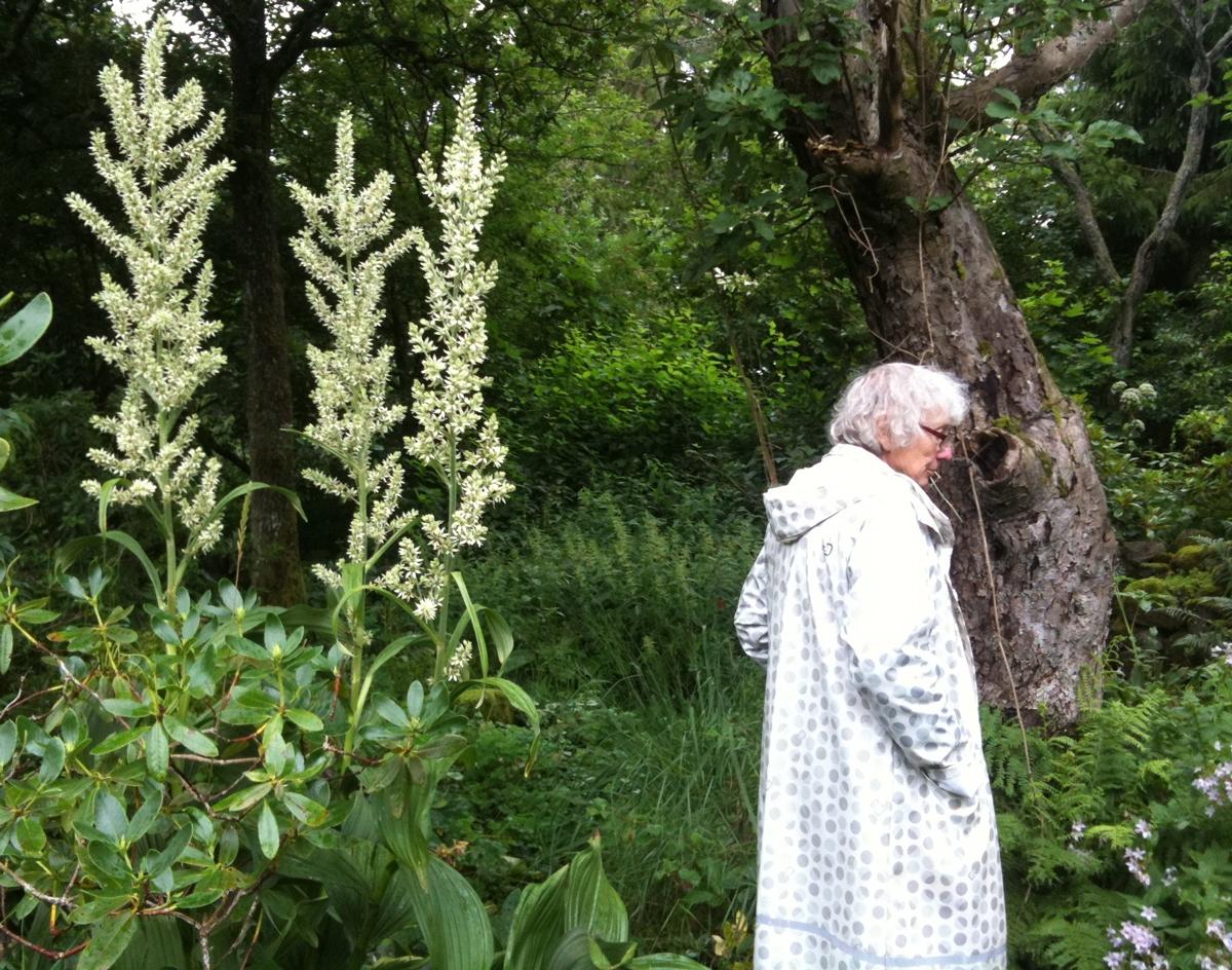 Nysrot och Inga Brolin i hennes trädgård. Foto: Mari Zander.