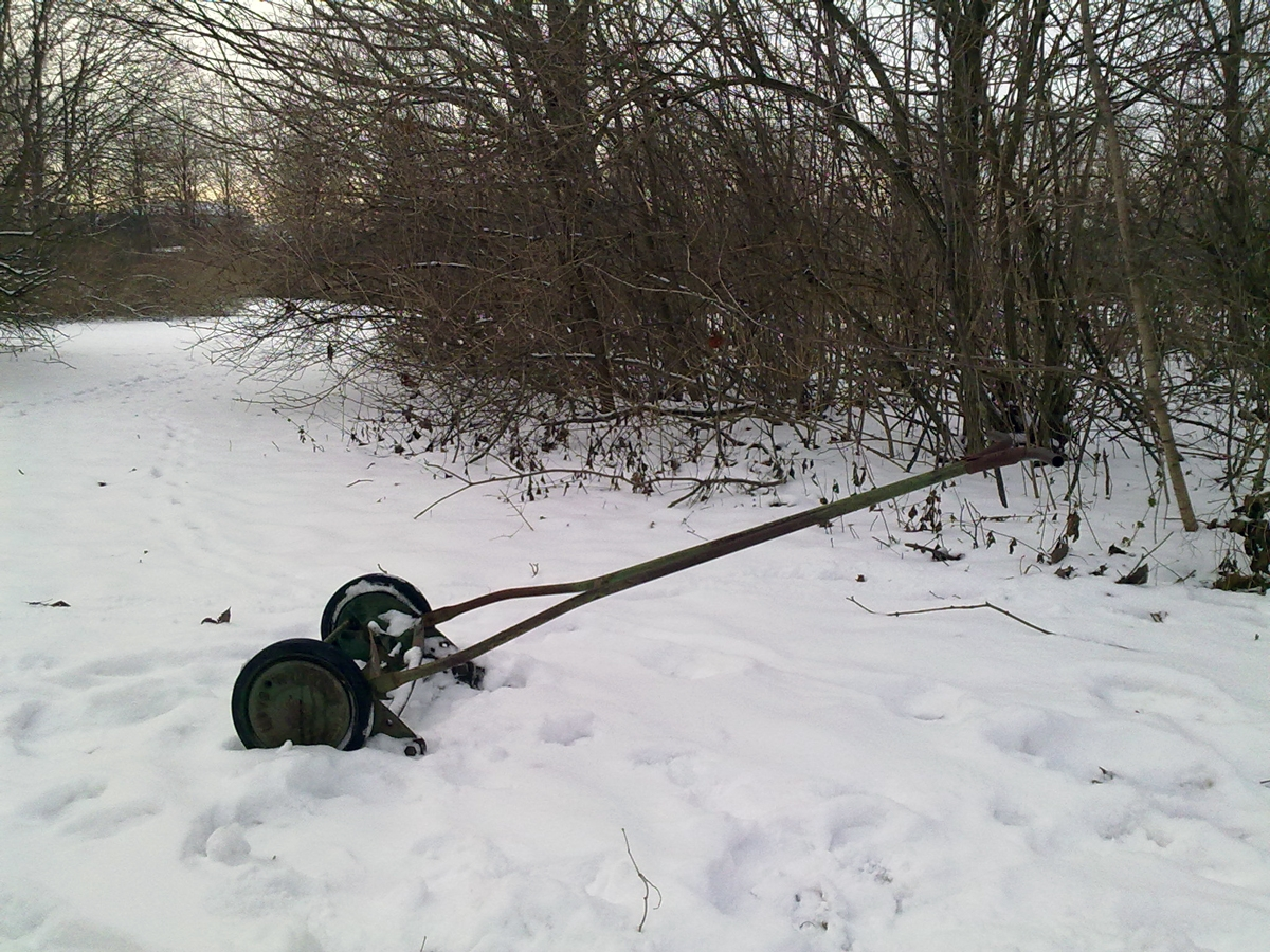 Vintergräsklippare. Foto: Dan Abelin.