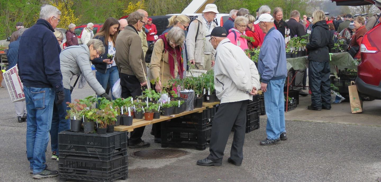 Växtmarknad maj 2016. Foto: Dan Abelin.