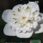 Medlemsbladet våren 2019
