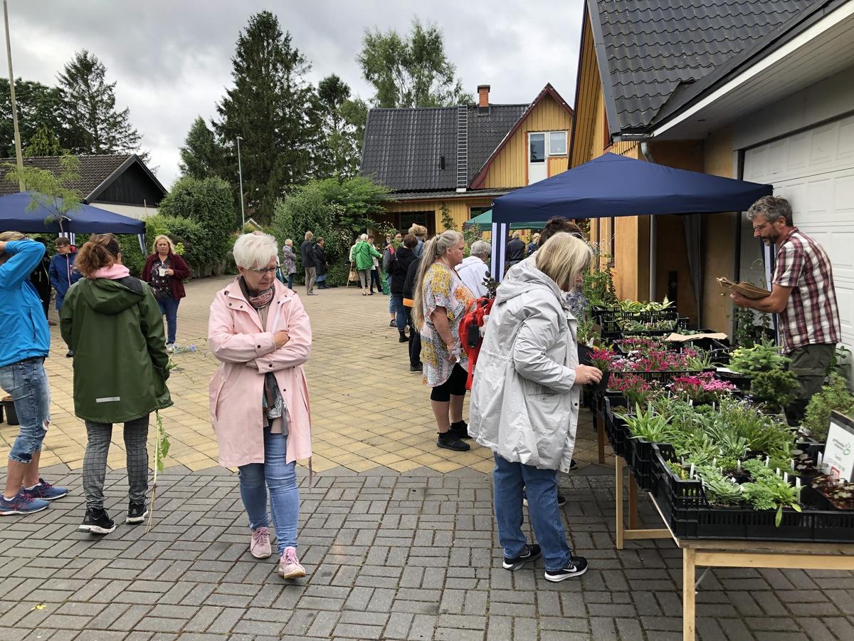 Växtförsäljning i Gärds Köpinge 4 juli 2020