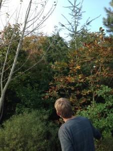 Arboretumvisning 12