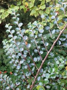 Arboretumvisning 15